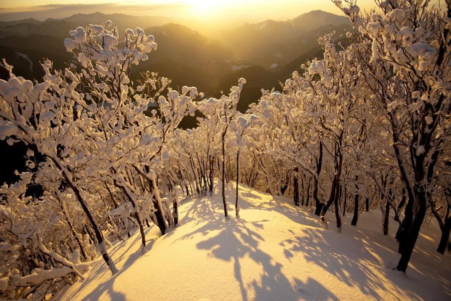 La luz del sol brillando en la nieve