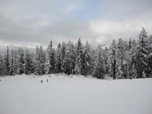 Esquiando en un claro del bosque