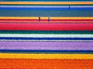 Colores en un campo de flores
