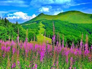Primavera en la montaña