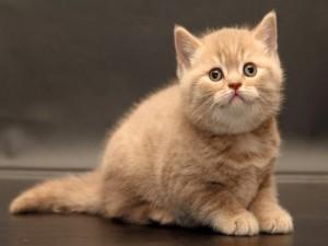 Hermoso gatito