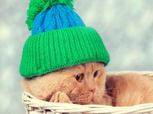 Gato con un gorro de lana dentro de una cesta