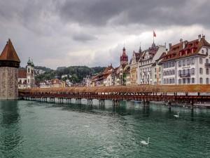 Cisnes en Lucerna (Suiza)