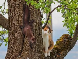 Una ardilla y un gato en el árbol