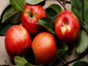 Exquisitas manzanas rojas