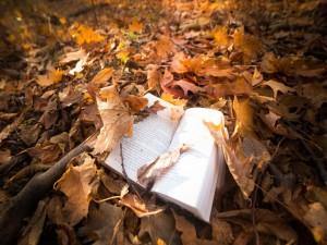 Libro entre hojas de otoño