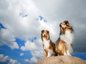Perros sobre una piedra