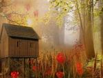 Día de niebla en el bosque