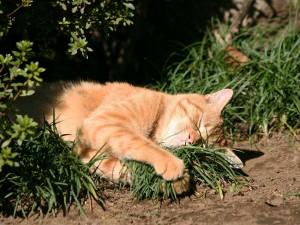 Gato agarrando un puñado de hierba