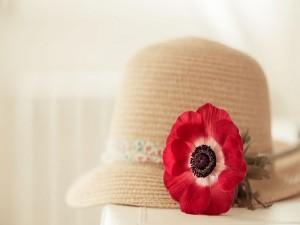 Sombrero con una bella flor