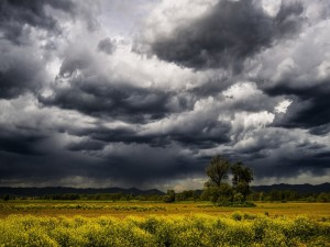 Campo bajo un cielo tormentoso
