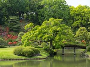 Personas disfrutando en un bello jardín japonés