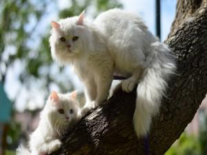 Gatos blancos en un tronco de árbol