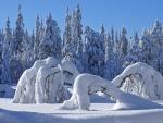 Árboles doblados por el peso de la nieve