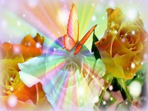 Mariposa posada en una rosa