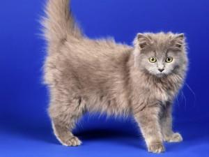 Un lindo gato gris