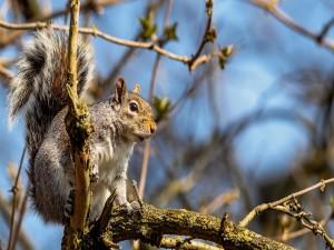 Ardilla sobre la rama de un árbol