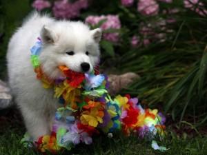 Perrito blanco jugando con un collar de flores