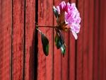 Flor entre la grieta de la valla