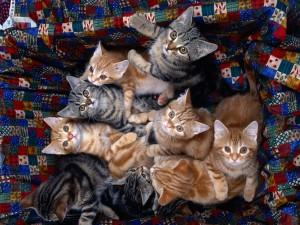Gatitos mirando arriba