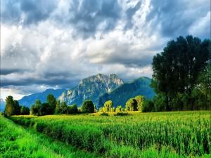 Pradera verde al pie de las montañas