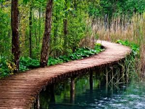 Puente de madera sobre un pantano