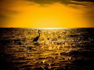 Silueta de una garza solitaria en el mar