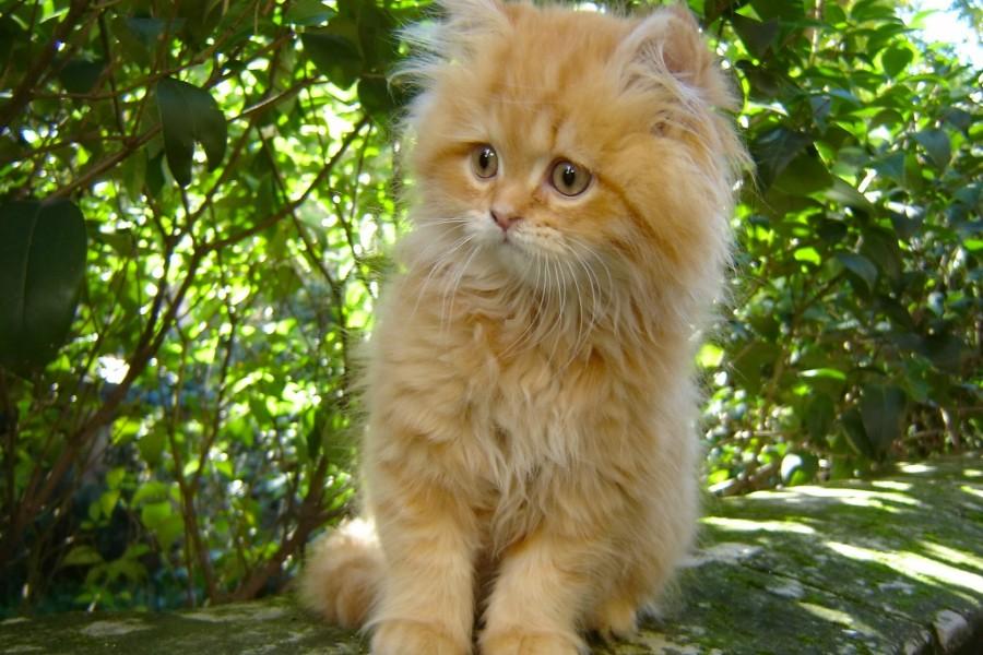 Gatito sentado cerca de los arbustos