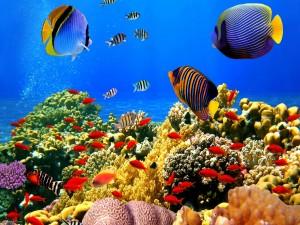 Peces bajo el agua sobre una gran barrera de coral
