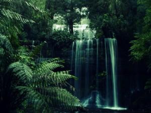 Gran cascada en la selva