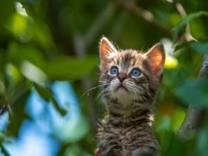 Gatito en un árbol