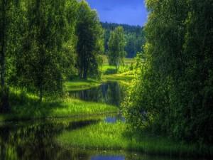 Sinuoso río cuyas orillas están cubiertas de hierba, árboles y arbustos
