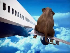 Elefante sentado en el ala de un avión
