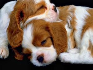 Cachorros acurrucados