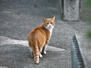 Gato mirando atrás