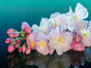Hermosa rama con flores