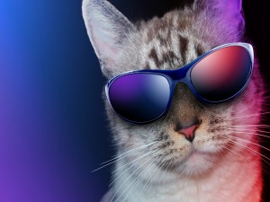 Gato con gafas de sol