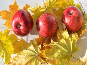 Deliciosas manzanas rojas sobre las hojas de arce amarillas