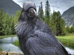 Un cuervo negro junto al río
