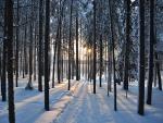 Sol filtrándose en el bosque nevado