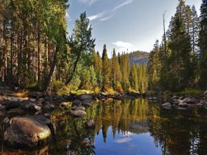 Pequeño lago en el bosque