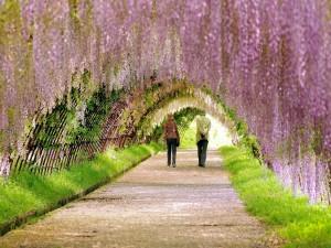 Paseando por el parque en primavera