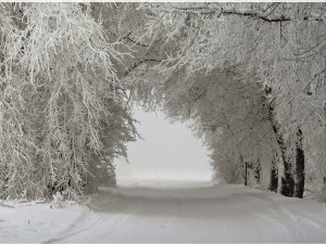 Camino nevado en invierno
