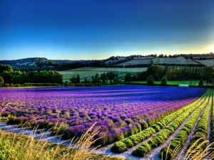 Un hermoso campo