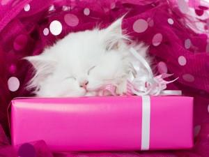 Gato durmiendo en una caja de color rosa