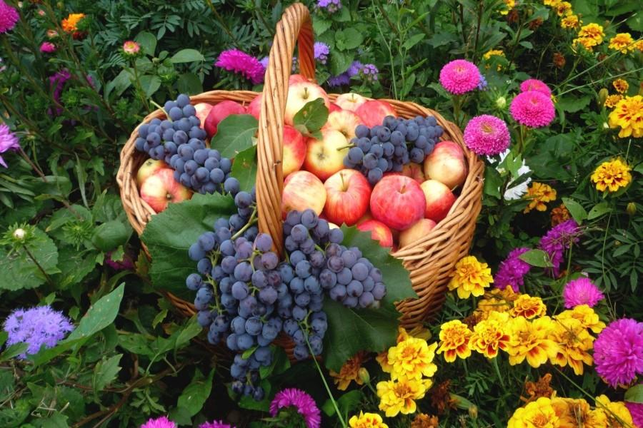 Cesta con frutas entre las flores