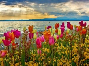 Primavera junto al lago
