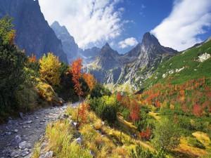 Sendero rocoso en la montaña