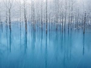 Árboles en el lago helado