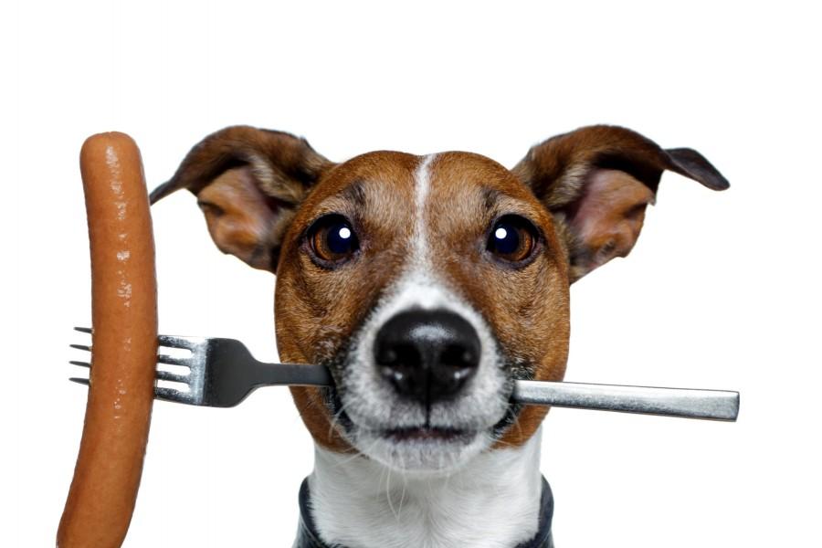 Perro con un tenedor y una salchicha
